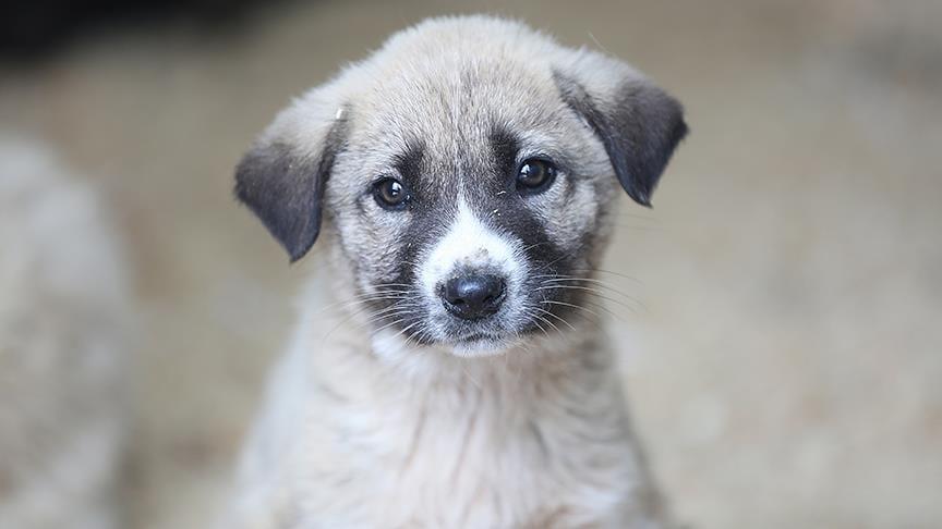 Animal lovers in Turkey feed street animals amid COVID-19 lockdown